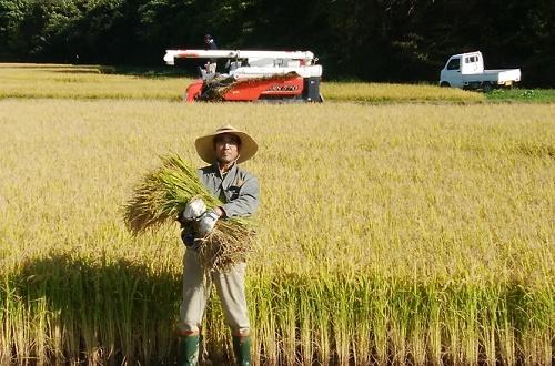【ふるさと納税】賀集農産 そらゆき60kg