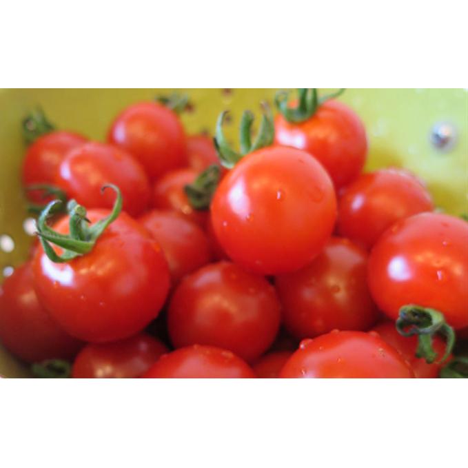 【ふるさと納税】北海道月形町産ミニトマトキャロル10 約3kg 1箱 【野菜・トマト】 お届け:2020年7月下旬~8月末頃まで