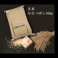 【ふるさと納税】 2412 玄米ななつぼし30kg×1袋