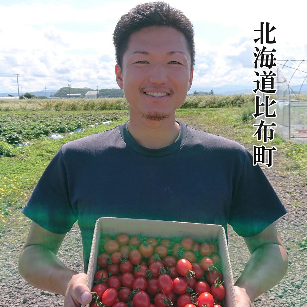 【ふるさと納税】Farm of soul(畠山農園)高糖度フルーツトマト【ジェルバ】1.2kg 予約開始!