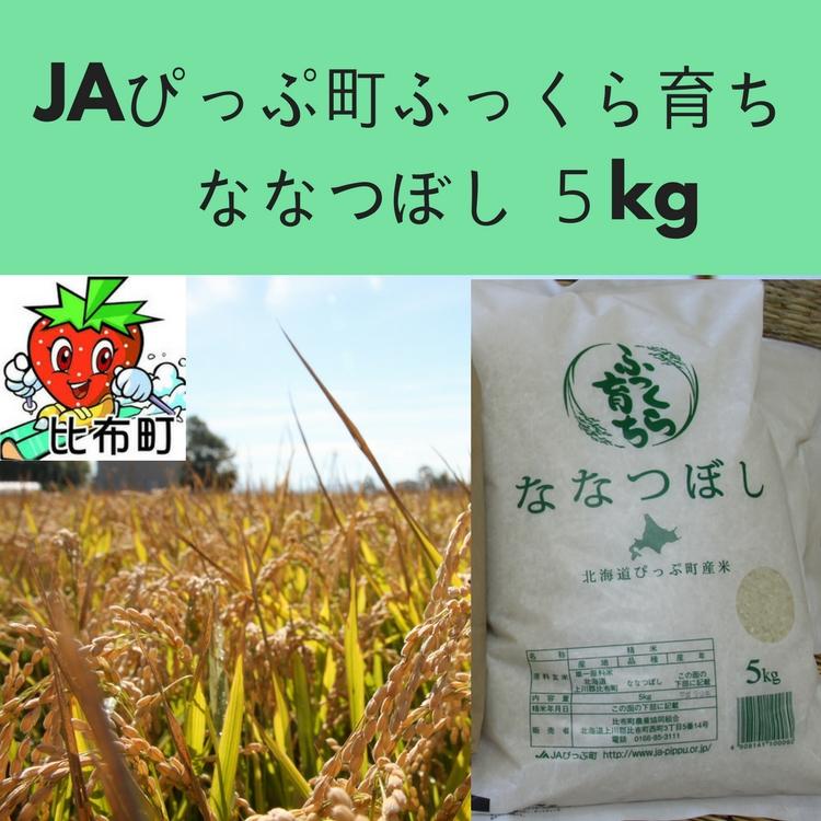 【ふるさと納税】JAぴっぷ町 ななつぼし 精米5kg 2019年産米