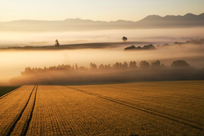 【ふるさと納税】[072-01]写真家 中西敏貴 額付き写真「麦秋の丘」(サイン入り)