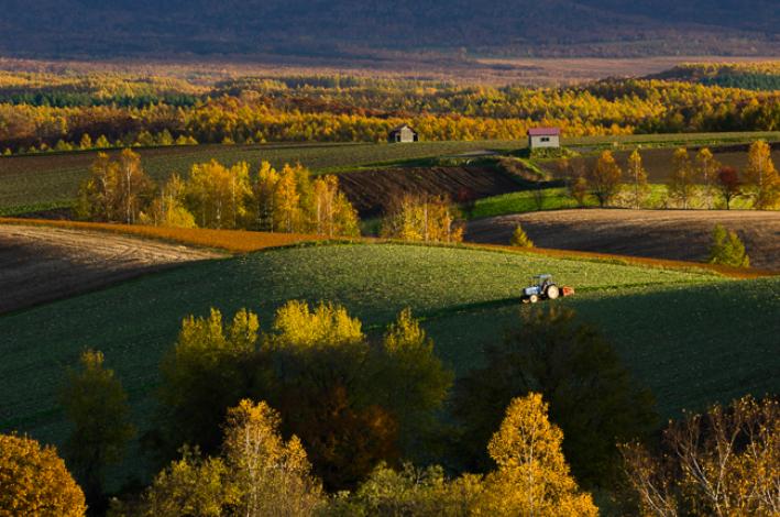 【ふるさと納税】[072-02]写真家 中西敏貴 額付き写真「秋色の丘」(サイン入り)