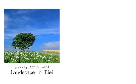 ふるさと納税 写真家 阿部俊一 名刺台紙 B 送料無料 メッセージカード100枚 005-06 お買い得