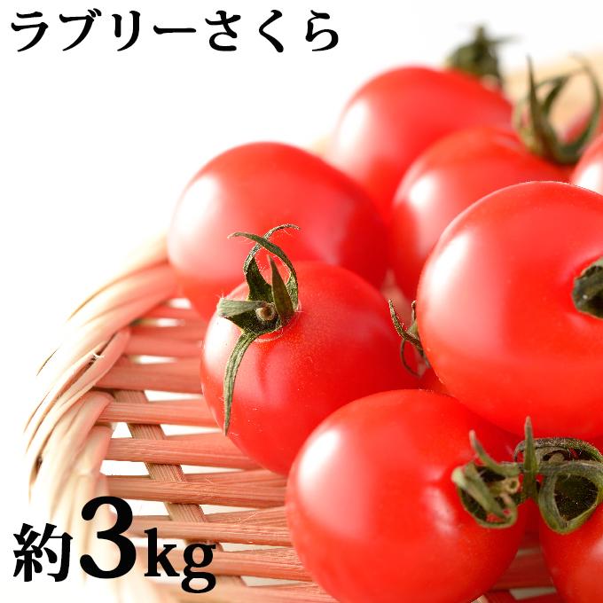 【ふるさと納税】もぎたてミニトマト【ラブリーさくら】3kg≪北海道上富良野産≫ 【野菜・ミニトマト・とまと】 お届け:2020年7月中旬~9月上旬まで