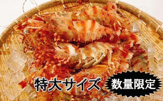 【ふるさと納税】【数量限定】幻のえび 北海道羽幌産 特大ゴジラエビ 1kg