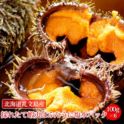 【ふるさと納税】北海道礼文島産 採れたて蝦夷ばふんうに塩水パック 100g×6 【魚貝類・ウニ】 お届け:2020年6月~7月末まで
