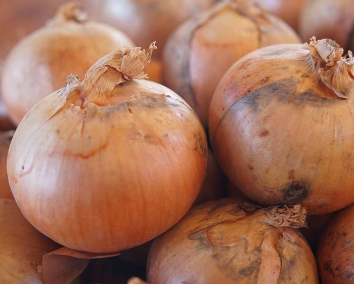 【ふるさと納税】JAつべつ 特別栽培玉ねぎ 20kg