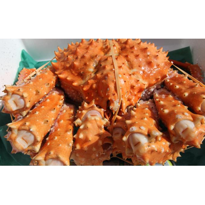 【ふるさと納税】北海道オホーツク産 幻の蟹 イバラガニボイル 1.4~1.8kg 【蟹・カニ】