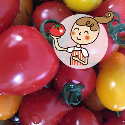 【ふるさと納税】<2020年6月下旬よりお届け>北海道壮瞥産 彩りミニトマト約3kg 【野菜・ミニトマト】 お届け:2020年6月下旬~7月末頃まで
