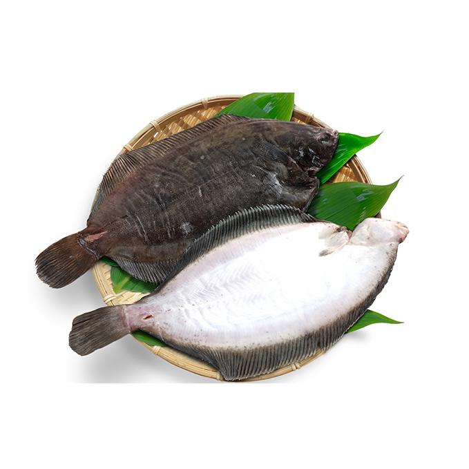新作販売 北海道日高町 ふるさと納税 北海道日高産なめたカレイ約1.4kg 魚貝類 干物 魚介類 加工食品 正規逆輸入品