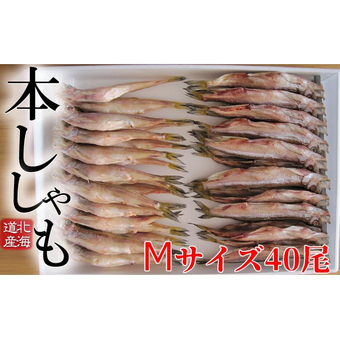 北海道日高町 ふるさと納税 北海道産ししゃもM40尾セット 気質アップ 魚貝類 干物 ししゃも 人気上昇中 魚介類