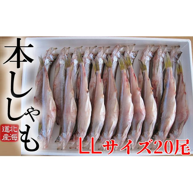 北海道日高町 ふるさと納税 北海道産ししゃも LL 半額 20尾セット 干物 人気ブランド 魚貝類 11月のおすすめ 魚介類 ししゃも