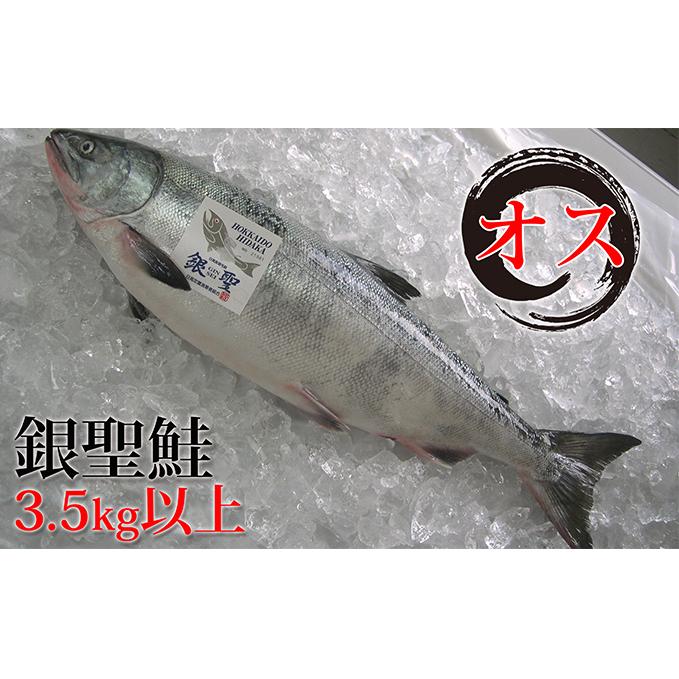【ふるさと納税】日高産銀聖鮭【生】3.5kg以上(オス) 【魚貝類・鮭・サーモン】 お届け:2020年9月中旬~10月末まで