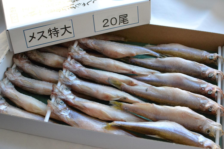 評判 送料無料カード決済可能 北海道広尾町から本物のししゃもをお届け ふるさと納税 本ししゃも一夜干し特大メス20