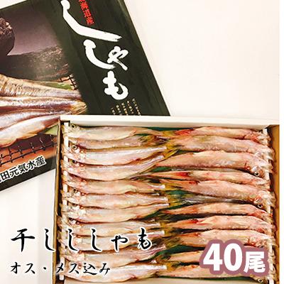 おしゃれ 北海道厚岸町 ふるさと納税 干しししゃも オス ししゃも 魚貝類 シシャモ メス込40尾入 受賞店