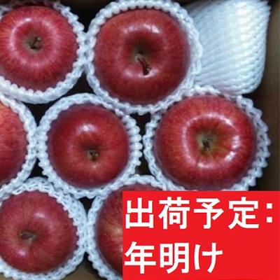 大きな取引 【ふるさと納税】年明け ふみ丸ファーム 訳ありサンふじ3kg【弘前市産・青森りんご】 【果物類・林檎・りんご・リンゴ】 お届け:2021年1月6日~2021年2月28日, ヤメシ 794e571e