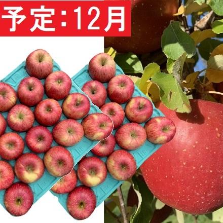 贈与 青森県弘前市 ふるさと納税 12月 美味 訳あり葉とらずサンふじ約10kg 弘前市産 りんご 林檎 購買 果物類 青森りんご リンゴ お届け:2020年12月10日~2020年12月30日