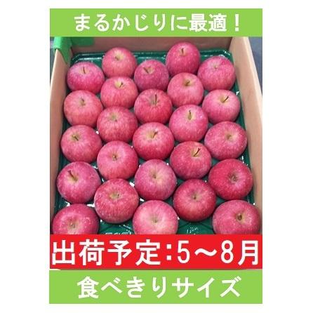 5~7月 りんご 5kg程度 小玉有袋ふじ  お届け:2021年5月6日~2021年7月28日 - thefandomentals.com