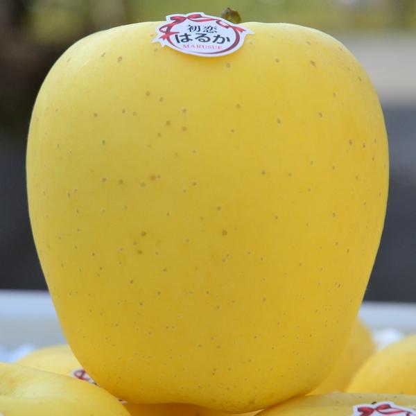 【ふるさと納税】【2020年産・先行受付】高級りんご「はるか」【蜜センサー選別品】~こんなりんごがあったのか!~ 約3kg