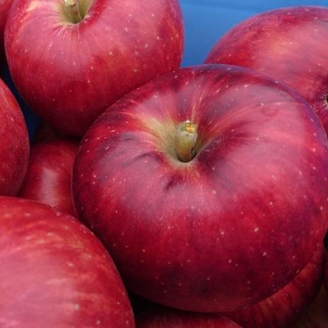 【ふるさと納税】りんご「つがる」【2020年産先行受付】14~20玉 約5kg ★2020年9月中旬頃から申込順に発送★