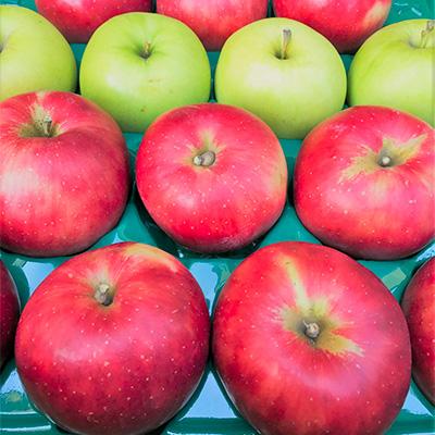 【ふるさと納税】ももやの「りんご」10kg (32~40玉)1箱品