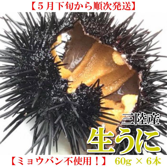 【ふるさと納税】【ミョウバン不使用!】生うに 60g×6本セット