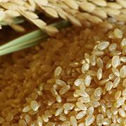 【ふるさと納税】【令和元年産】宮城県白石市産 ササニシキ自然乾燥米玄米 10kg 【米・お米・ササニシキ】 お届け:2020年5月下旬まで