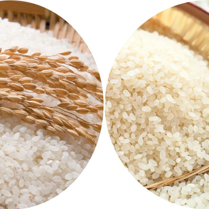 【ふるさと納税】郷の有機使用特別栽培米 ひとめぼれ 7kg + ササニシキ 7kg 【お米・ひとめぼれ】