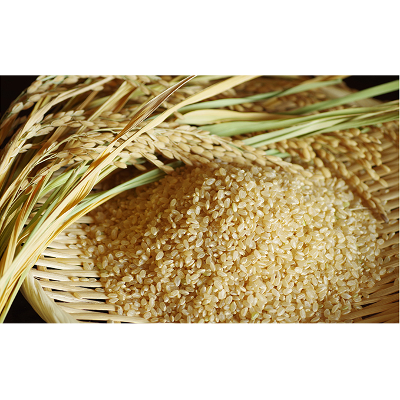 【ふるさと納税】あきたこまち玄米10kg×2袋/計20kg 【精米・お米・あきたこまち】