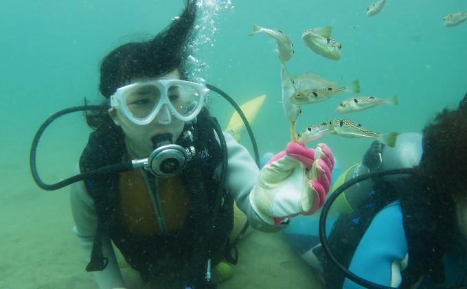 【ふるさと納税】【なまはげの海でダイビング!!】 海洋体験ビーチダイビング 1名様 【体験チケット・レジャー】