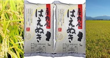 【ふるさと納税】A51-025 はえぬき(10kg)
