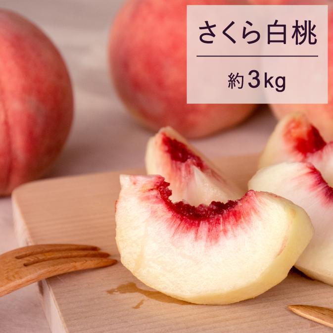 【ふるさと納税】もも 桃 さくら白桃 3kg 秀 15玉以上 贈答 令和二年産 2020年産 果物 送料無料