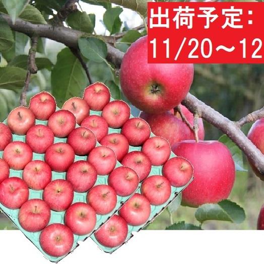 【ふるさと納税】大江町産 贈答規格サンふじ約10kg・秀 【果物類・林檎・りんご・リンゴ・フルーツ】 お届け:2020年11月20日~2020年12月15日
