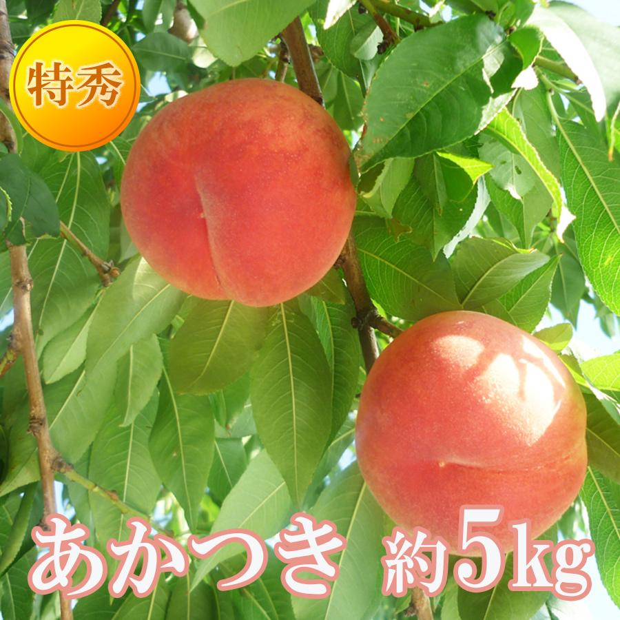 【ふるさと納税】【先行予約】No.0860あかつき 5kg 特秀(15~18玉)