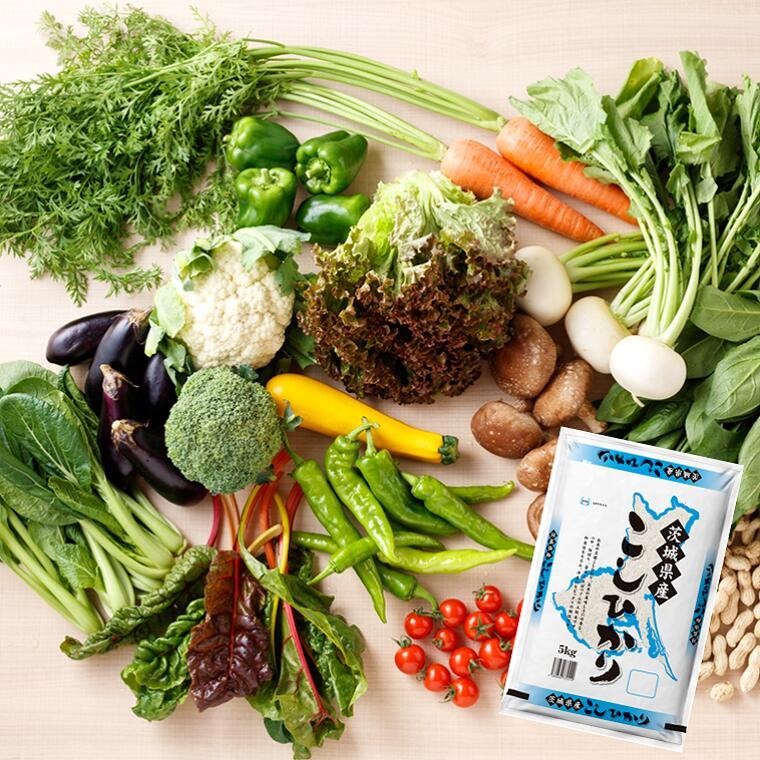 【ふるさと納税】新鮮野菜と茨城県産コシヒカリ5kgセット