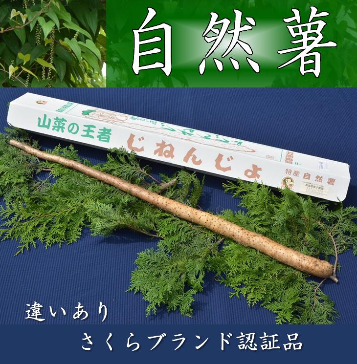 【ふるさと納税】さくらブランド認証品 えみの自然薯 1本(700g以上)