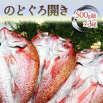 富山県魚津市 ふるさと納税 富山湾産 のどぐろ開き 特大500g級×3尾 干物 ノドグロ のどぐろ 魚貝類 人気 おすすめ 当店一番人気