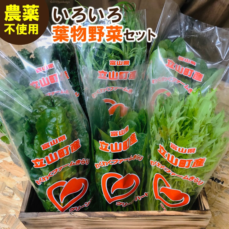 【ふるさと納税】わくわくファームきらりのいろいろ葉物野菜セット【野菜類/セット・詰合せ】