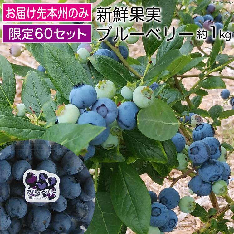 【ふるさと納税】新鮮果実ブルーベリー約1kg 限定60セット【果物類】(※お届け先本州のみ)お届け:2020年7月下旬~8月中旬
