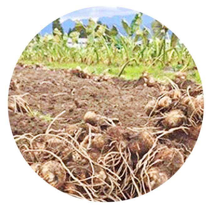 【ふるさと納税】皮むき里芋と立山の農家が作った米みそのセット 【野菜類・野菜セット・味噌】 お届け:2019年10月上旬まで