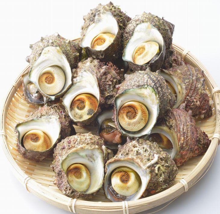 【ふるさと納税】朝どれ旬のサザエ詰め合わせ(大2kg)刺身 つぼ焼き 貝