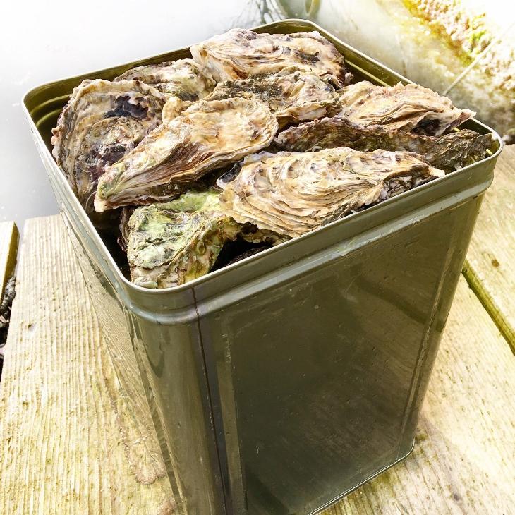 【ふるさと納税】能登牡蠣 殻付牡蠣 一斗缶/約10kg(約80~100個) 専用ナイフ 片手用軍手付 /世界農業遺産「能登の里山里海」※必ず加熱して食べてください※2020年1月より順次発送