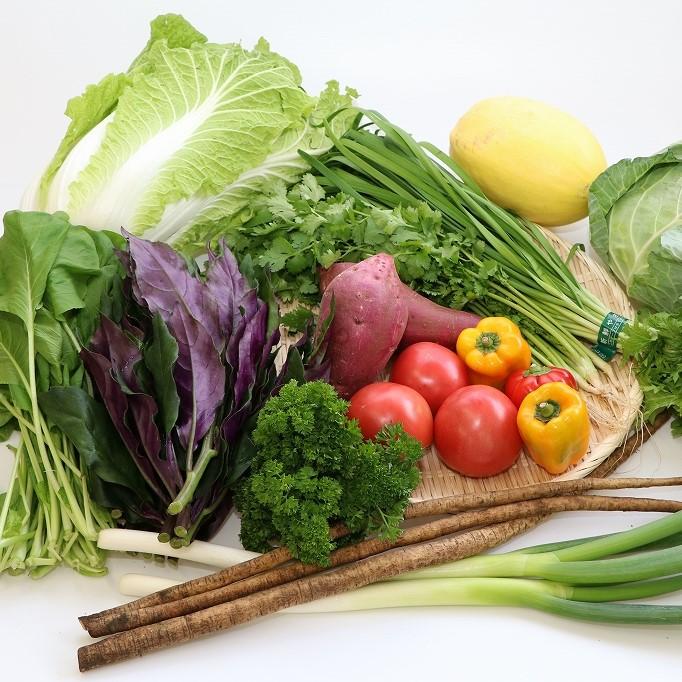 【ふるさと納税】直売所直送 季節の野菜の詰合せ