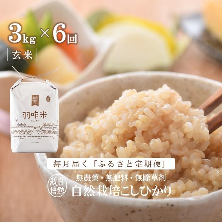 ふるさと納税 A025 定期便 無農薬 3kg×6回コース 驚きの値段 羽咋米 通販 激安 玄米 能登のこだわり自然栽培こしひかり