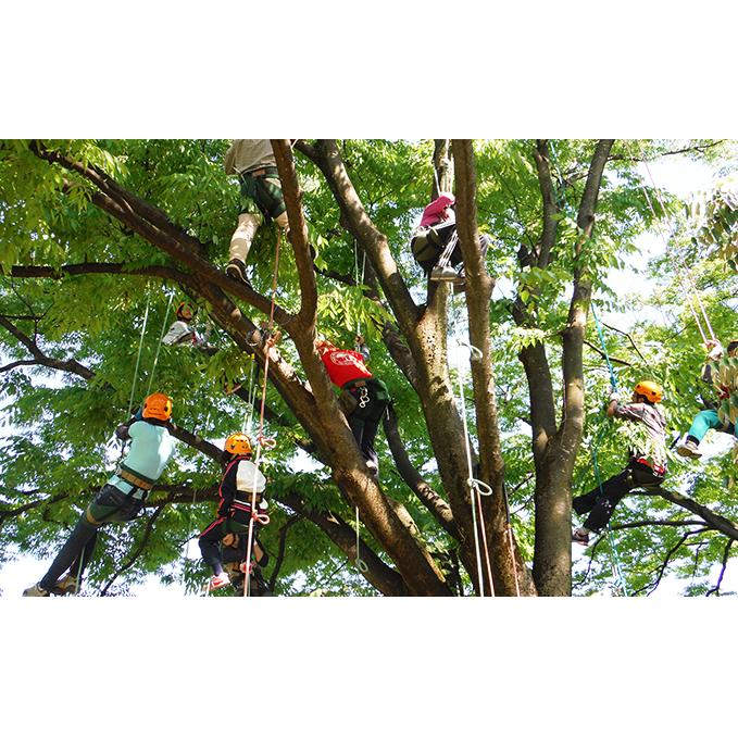 【ふるさと納税】【ワクワク!木登り体験】ツリークライミング&森カフェ 2名様分 【体験チケット】