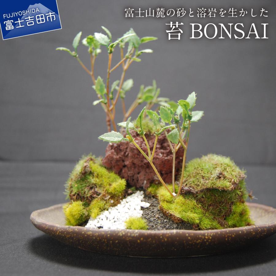 【ふるさと納税】和モダン 創作 苔BONSAI (大)〈丸皿・古瀬戸〉