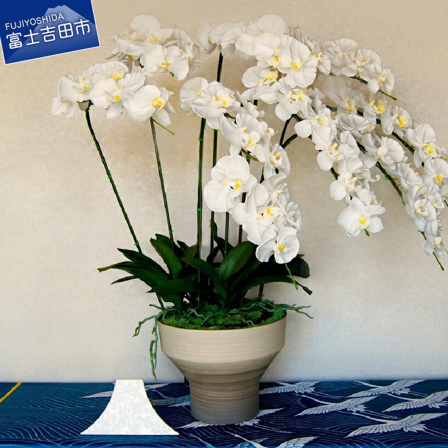 【ふるさと納税】 胡蝶蘭 コチョウラン お祝い お供え花 胡蝶蘭(特大) 送料無料