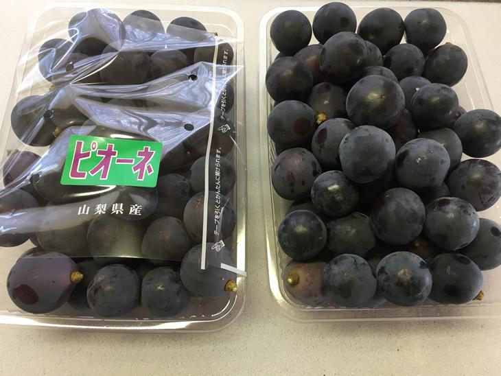 【ふるさと納税】中村葡萄園の旬の葡萄粒 ピオーネ2kg箱※8月下旬頃から順次発送予定