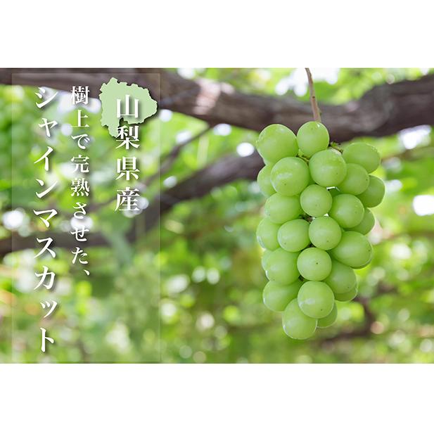 【ふるさと納税】【先行予約 限定300箱】特選 日本一の葡萄の里・山梨県 シャインマスカット約2.5kg(4~5房) 【果物類・ぶどう・マスカット・フルーツ】 お届け:2020年8月中旬~9月下旬